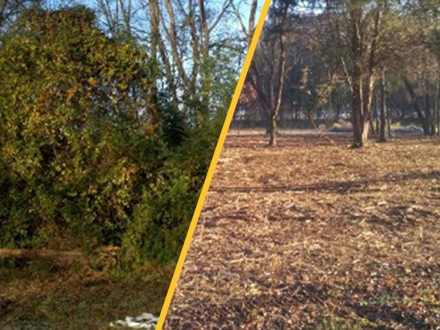 Residential Cleanup - Decaturville, TN